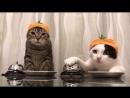 Котики. Такие смешные!