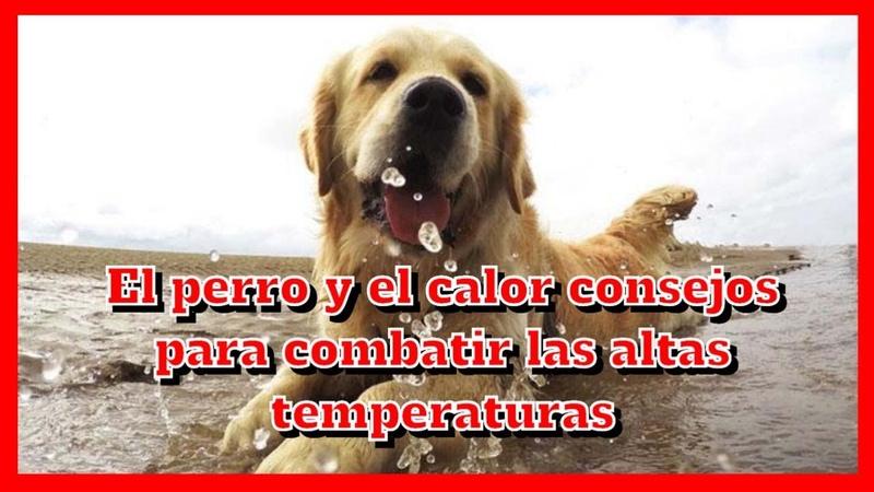 El perro y el calor consejos para combatir las altas temperaturas