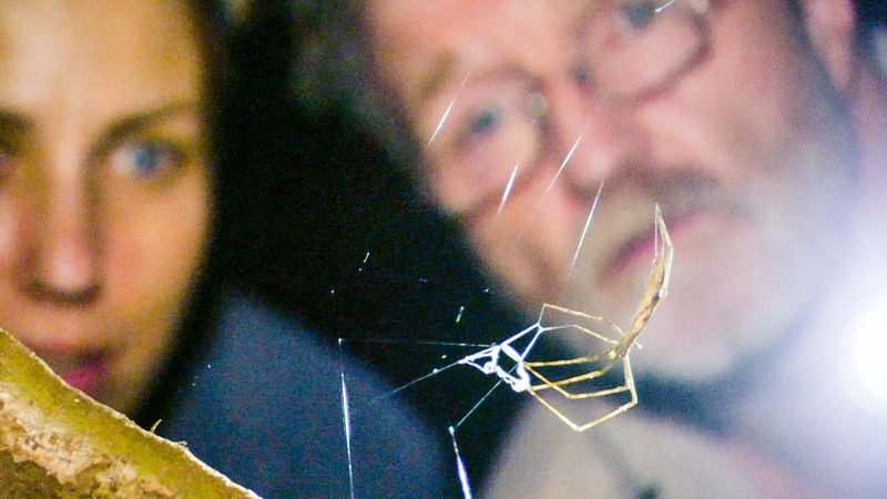 Net Casting Spider Ensnares Prey The Dark Nature's Nighttime World BBC Earth