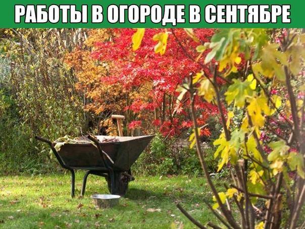 Работы в огороде в сентябре