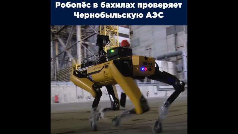 Робопёс на службе в Чернобыле