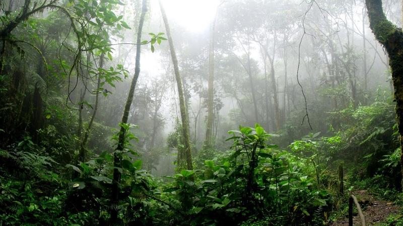 🏕🏕Musica de bosque lluvioso🏕🏕