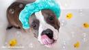 Ухаживать за шерстью собаки необходимо с самого малого возраста.