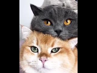 Три кота ж