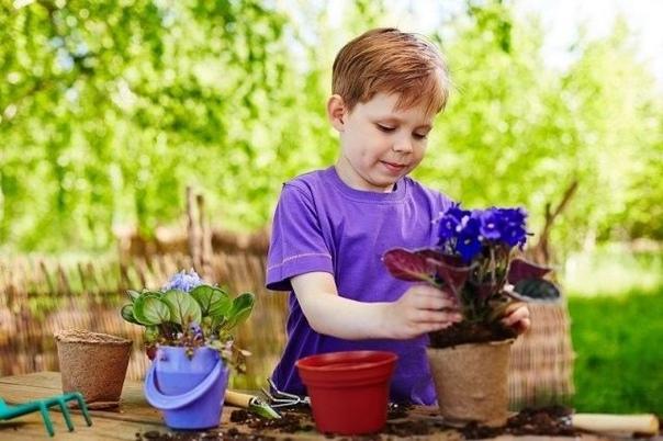 5 причин, почему у вас дома не цветут фиалки При соблюдении всех правил выращивания фиалка на вашем подоконнике может цвести до девяти месяцев в году.Почему фиалка не цветет1. Из-за неправильной