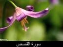سورة القصص Surah Al Qasas