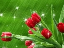 Doc384552147_443323481.mp4