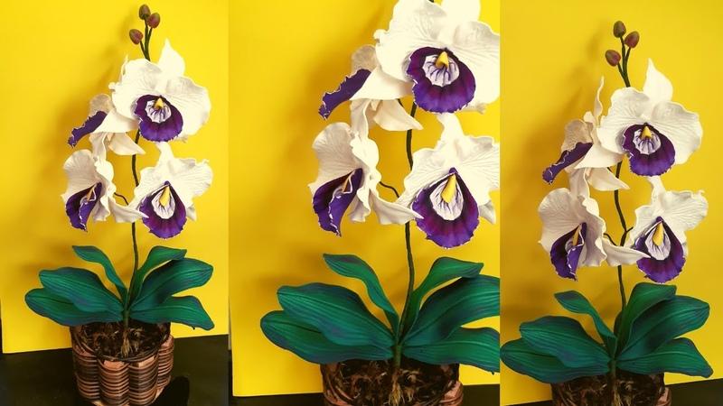 Maravilhosa orquídea balé em eva uma linda opção para o dia das mães