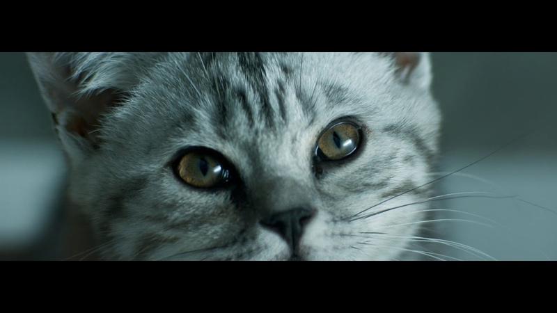 Curious Cats Rain Whiskas TV ad