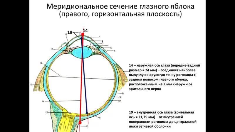 Клиническая анатомия органа зрения В А Изранов