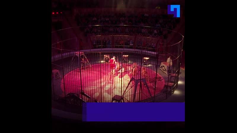 В Цирке на Фонтанке презентовали новую программу с гуманной дрессурой