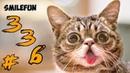 КОТЫ 2020 Смешные Коты Приколы С Кошками и Котами Funny Cats