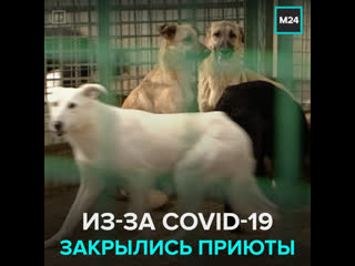 Из-за пандемии закрылись питомники для животных  Москва 24