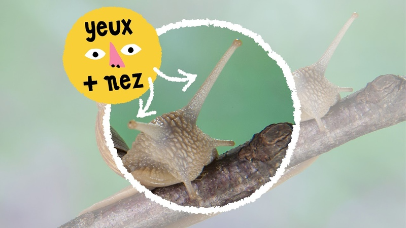 La Nature à la loupe lescargot