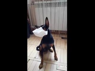Я всегда знала, что животные намного умнее некоторых особей людского рода)))
