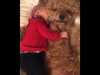 Какая собачка, даже не шевелится, пока малыш спит