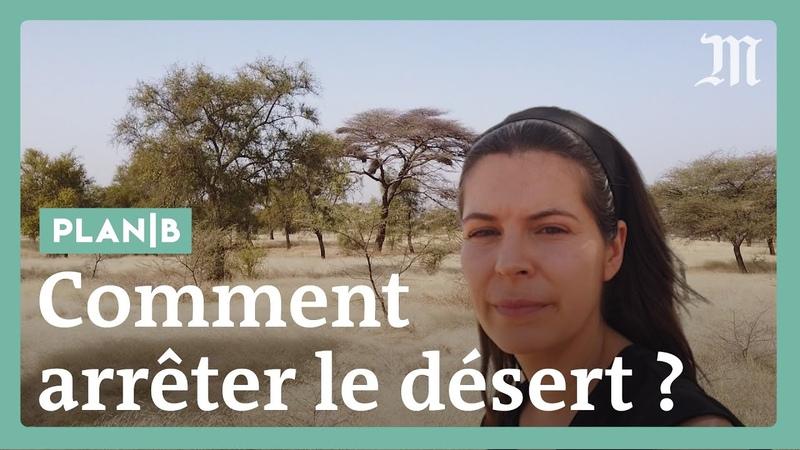 Как остановить пустыню Сахару при помощи Большой Зеленой стены План Б