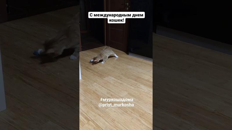 5678 26 11 2020 Котик Мохнатик уехал домой видео из дома