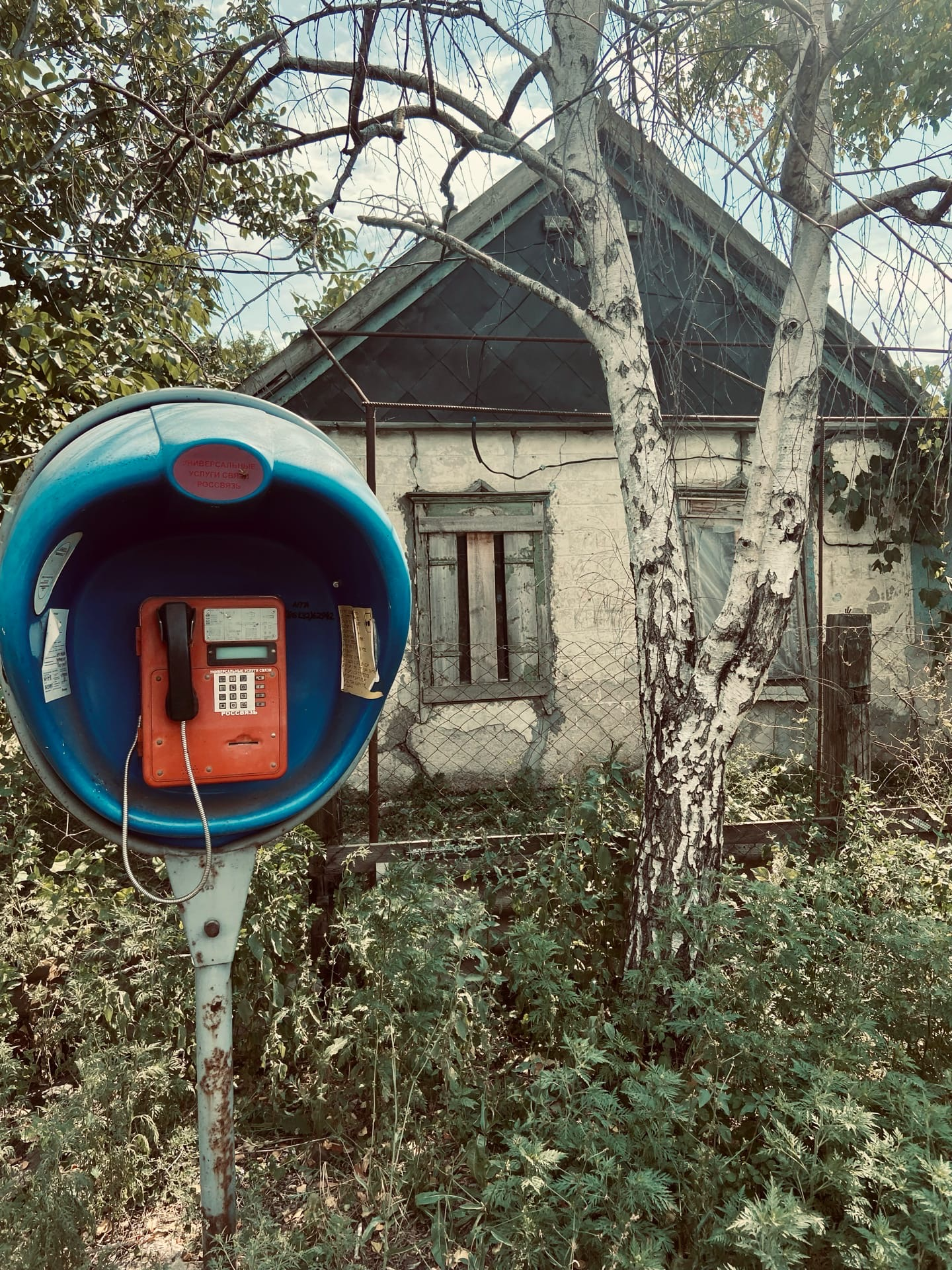 Ебеня Краснодарского края - Фото