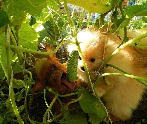 Овощи очень полезны!