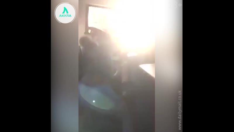 Драка нигеров   АКУЛА