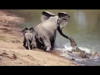Женские Хитрости () взаимовыручка у животных