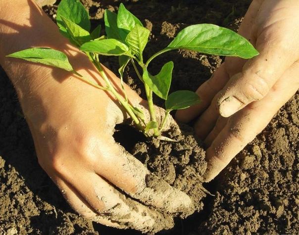 Ванночка от шершавой грубой кожи на руках после огорода