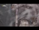 Грозовые кошки Storm Cats