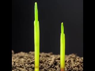 Интересные идеи по выращиванию садовых культур
