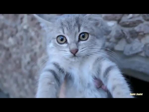 Kittens live in a warm basement