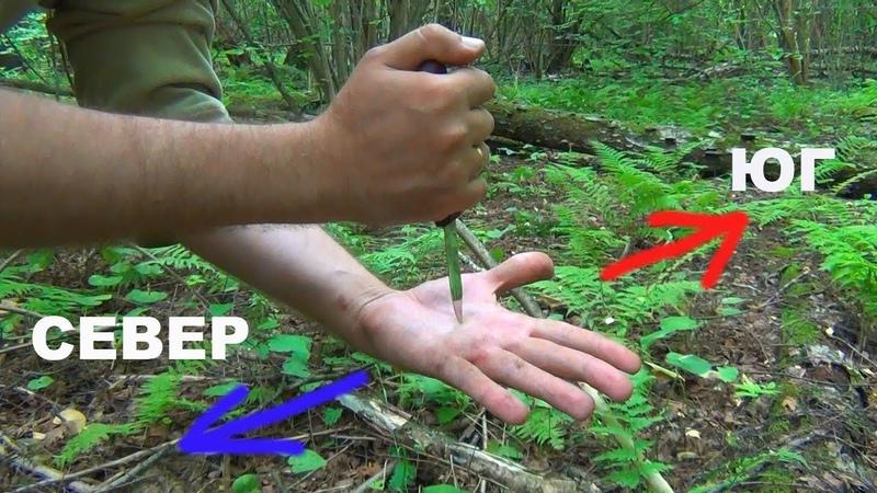 Как ориентироваться в лесу без компаса ДЕДОВСКИЙ МЕТОД