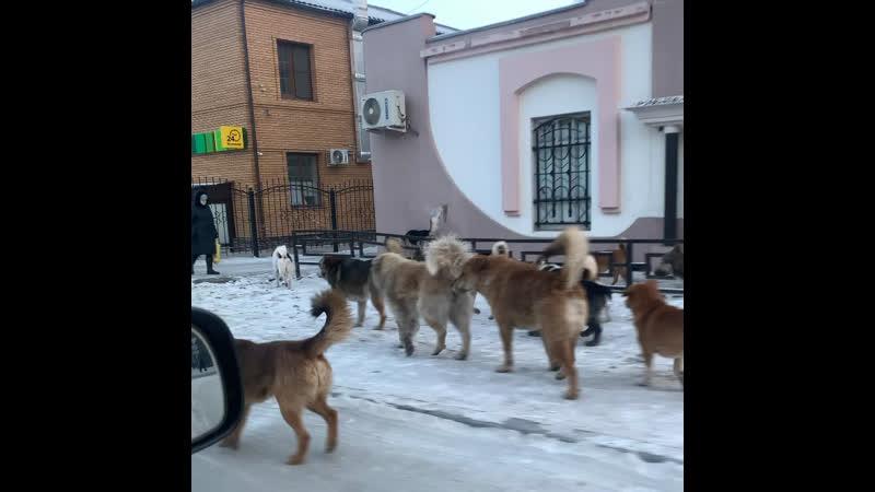 Собаки центр города