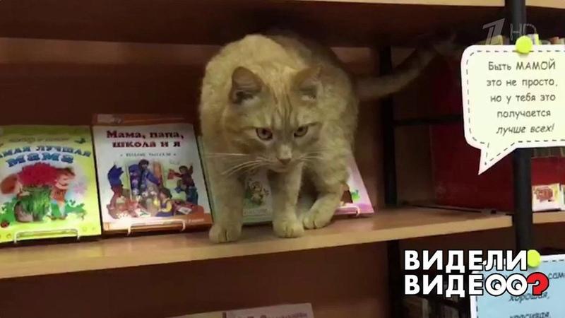 Кот библиотекарь Видели видео Фрагмент выпуска от05 04 2020