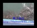 Остров черепах возле острова Хайнань Китай где на Хайнане посмотреть и покормить морских черепах
