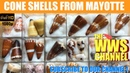 Sea shell Collection : Seashells from Mayotte