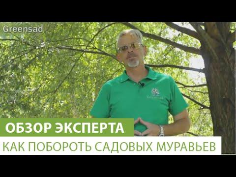 Как побороть садовых муравьев