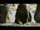 Слонёнок впервые принимает ванну | BBC Earth
