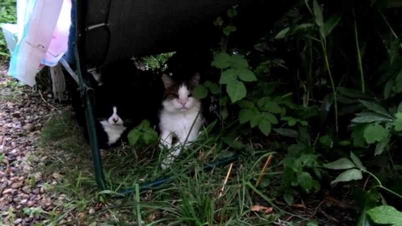 Котики и дождь.Философски наблюдая за дождём,из под раскладушки
