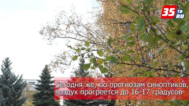 Аномально теплая погода продержится на Вологодчине до конца недели