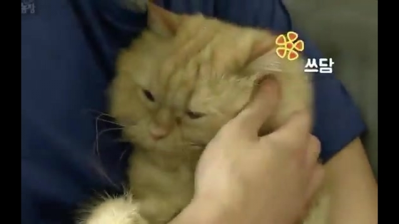 How about being caressed tenderly by Mino where his finger goes deep into your fur to your skin uh Jhonny i want