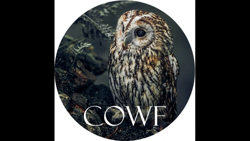 Creative Owls Wattpad Ficbook