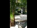 Komodo feeding