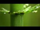 BBC Как вырастить планету 1 Жизнь из света Познавательный природа исследования 2012