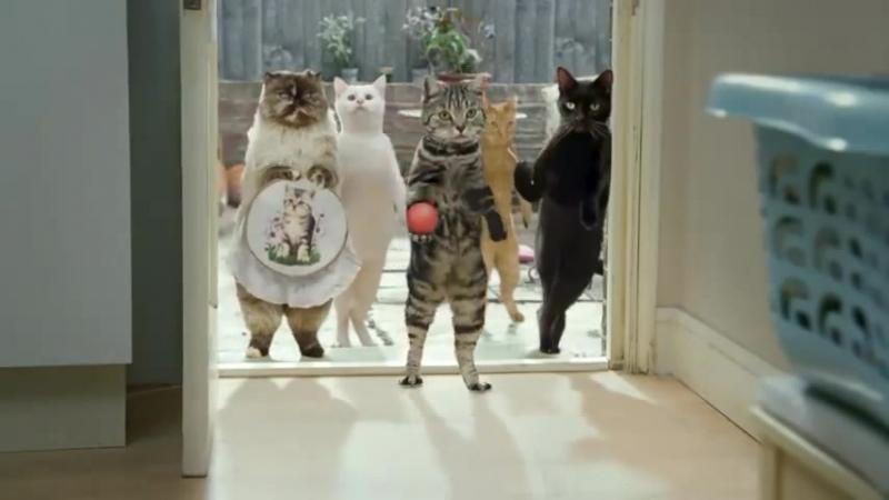 Реклама молока Cravendale - Cats with Thumbs