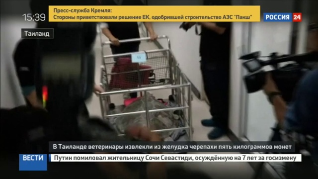 Новости на Россия 24 • Морскую черепаху облегчили на 900 монет