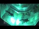 Art Aquarium Prisrium призматический аквариум с 12 ю имитационными рыбками и светозвуковым сопровождением