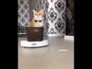 Ты никогда не будешь так же крут, как этот кот
