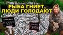 На Камчатке уничтожают рыбу чтобы не снижать цену
