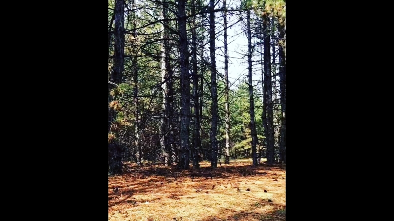 В лесу кайфово👍🏻☺️