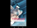 Meantime @LolaFlanery took Gizmo on a car rise and dedicated him a song 😝 SoCute